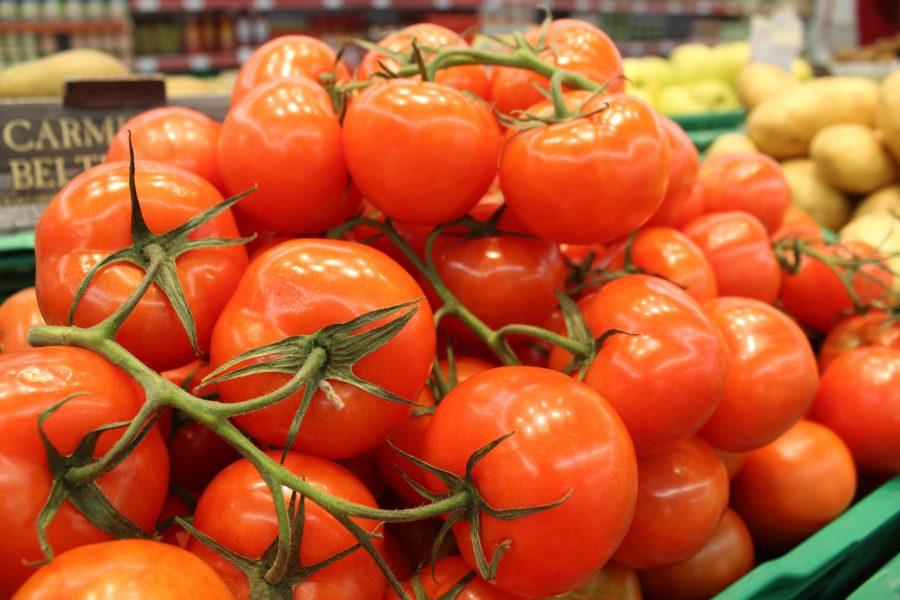 tomate de rama baja